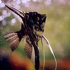 Angelfish have Soul by donnididit