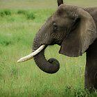 Elephant by JKutchera