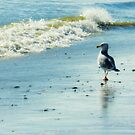 Seagull Stroll by Sharon Woerner