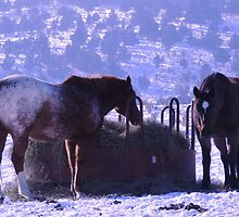 Breakfast of Champions by © Betty E Duncan ~ Blue Mountain Blessings Photography