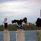 Pelican Paradise, Greenwell Point, NSW by BeccaS