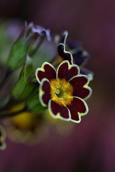 Hearts n Flowers by Linda Cutche