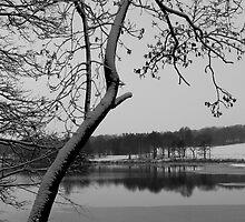 Frozen Tree by James Kowacz