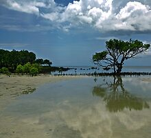 Mangroves at Archer Point by Peter Doré