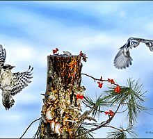 Downy and Titmouse playing on Lichen Stump by Randy & Kay Branham