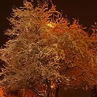 White tree wonder... by Pegasi Designs