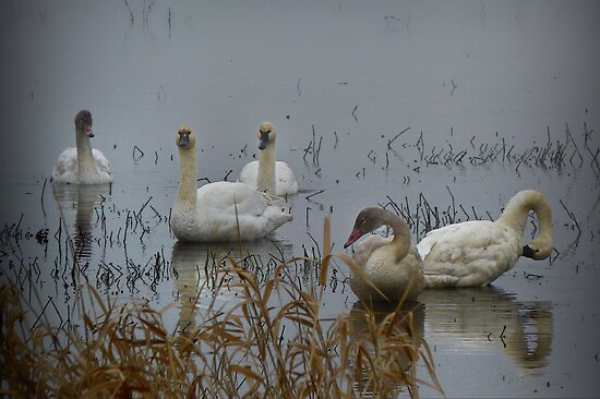Peace On The Pond by Charles & Patricia   Harkins ~ Picture Oregon