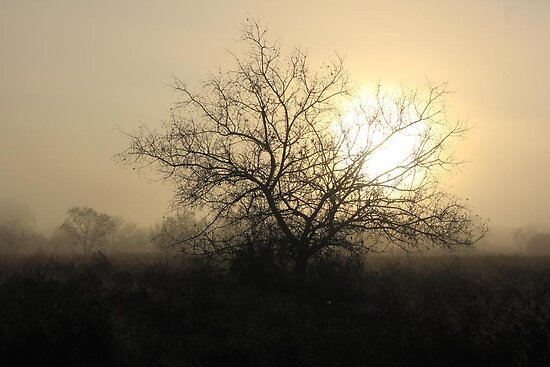 Misty Sunrise by Paul Sturdivant