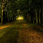 Shady Wooded Passage in Brittany France by Buckwhite