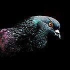 Pigeon by BavosiPhotoArt