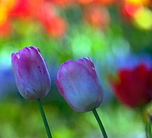 Tulip Garden Dreams by Gene Walls