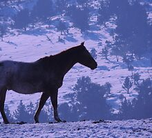 Horse and Blue Delft by © Betty E Duncan ~ Blue Mountain Blessings Photography