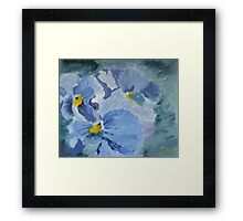 Pansy Show Off Framed Print