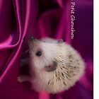 The Little Hedgehog 1 by antmason