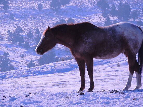 January's Horse by © Betty E Duncan ~ Blue Mountain Blessings Photography