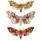 Common British Hawk Moths by JamesAlden