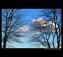 Tree Structures Against Winter Blue Sky  by © Sophie W. Smith