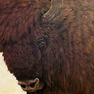 Wisent III by A V S TURNER