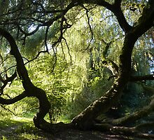 The willow tree in the sunshine by elsiebarge