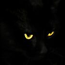 Cats Eyes  by vic321