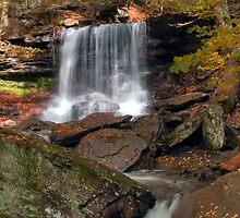 First Fallen Leaves at B. Reynolds Waterfall by Gene Walls