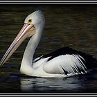 The Pelican! by Susan Freeman
