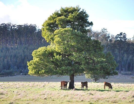 Calves under a lone tree by Cameron Hicks