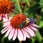 Busy Bee 3 by d1373l
