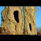 Natural Tree Hollows by  Sophie Smith