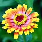 Rainbow Flower by James Iorfida