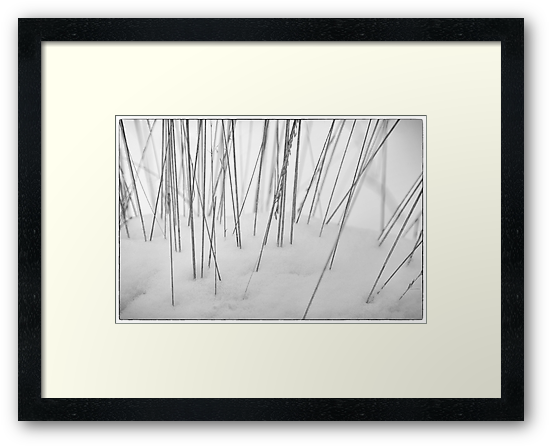 Grasses in the Snow by Natalie Kinnear