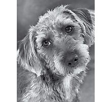 Cute Pup in Black and White Photographic Print