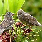 I Said...We're Leaving Home... - Sparrow Release - NZ by AndreaEL