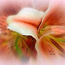 In Every Soft Place ~ ( a poem is in the description area ) by Elaine Bawden