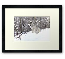 My Wolf : The kiss of the wolf Framed Print