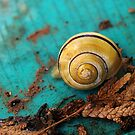 Yellow Snail House by vivendulies