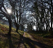 Tree Lined Walk...Uplyme,  Devon. UK by lynn carter