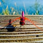 Pink Dragonfly by Soniris
