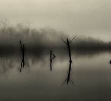 Tranquil by SuddenJim