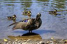 Mama Mallard & Ducklings by Gene Walls