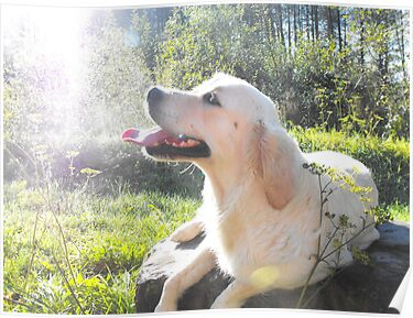 Sunbathing Dog by Abbie Macmillan