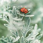 Lady Bug by Armando Martinez
