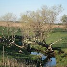 Tree Crossing a Creek by Deb Fedeler