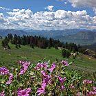 Alpine Blooms by JPMcKim