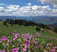 Alpine Blooms by JPMcKim