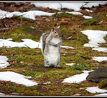Hooray! The Snow Is Melting! by Mikell Herrick