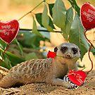 Sexy Meerkat Valentine by Larry3