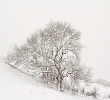 Snowy Tree by Lynne Morris