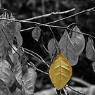 OneYellow Leaf by DebbyTownsend