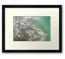 Silver Mint Dandelion Framed Print